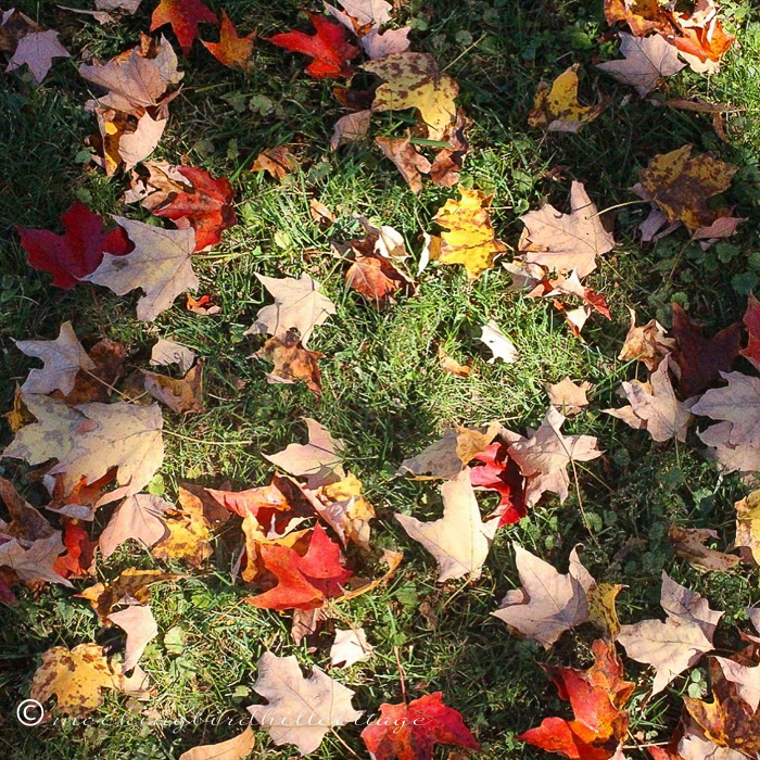 10-15-autumnleaves