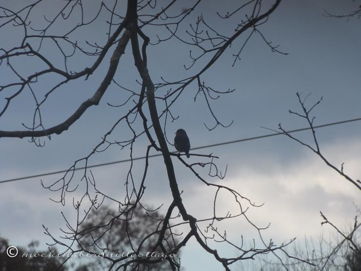 10-26-bluebird