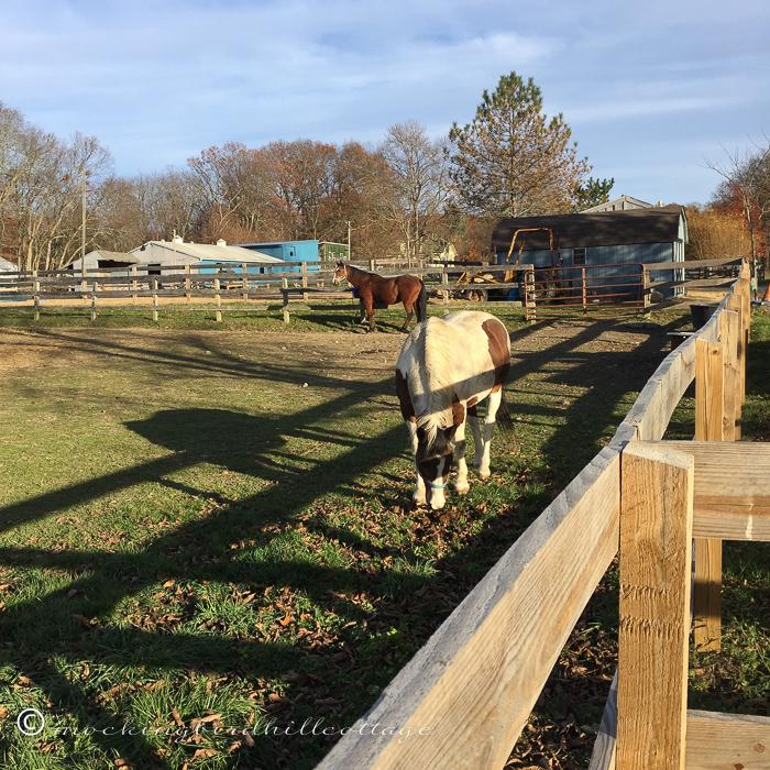 11-12-horses