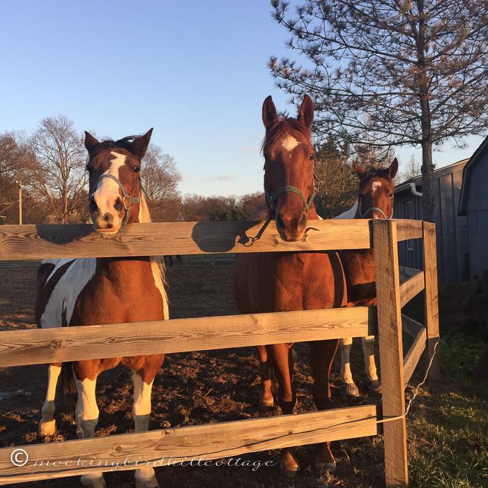 11-17-horses3