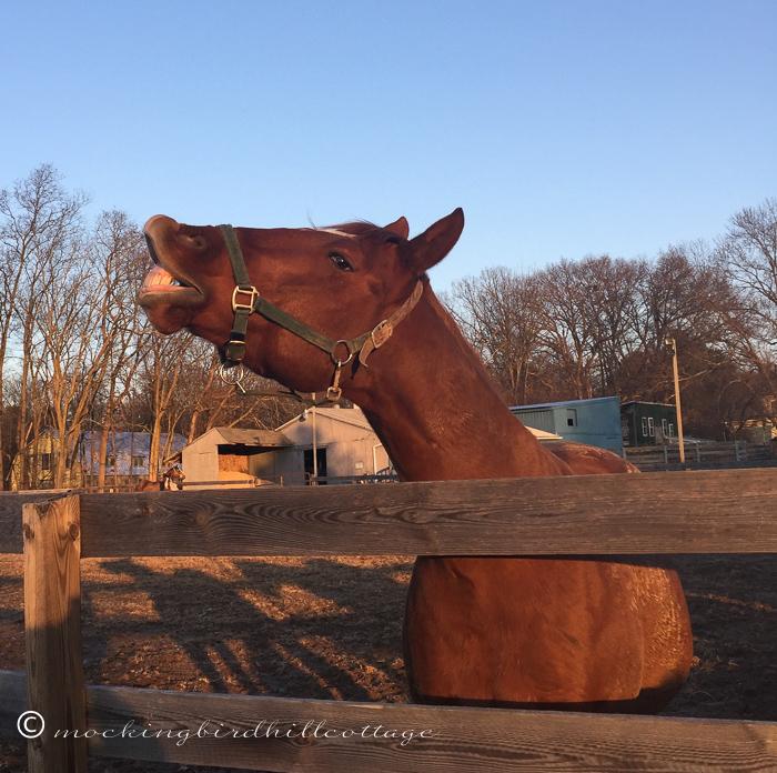 11-17-horses4