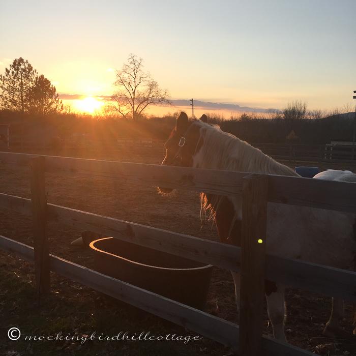 11-17-horses5