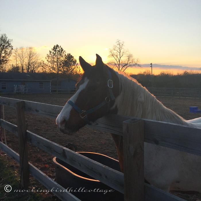 11-17-horses6