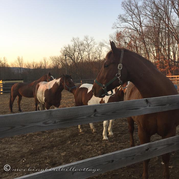 11-17-horses7