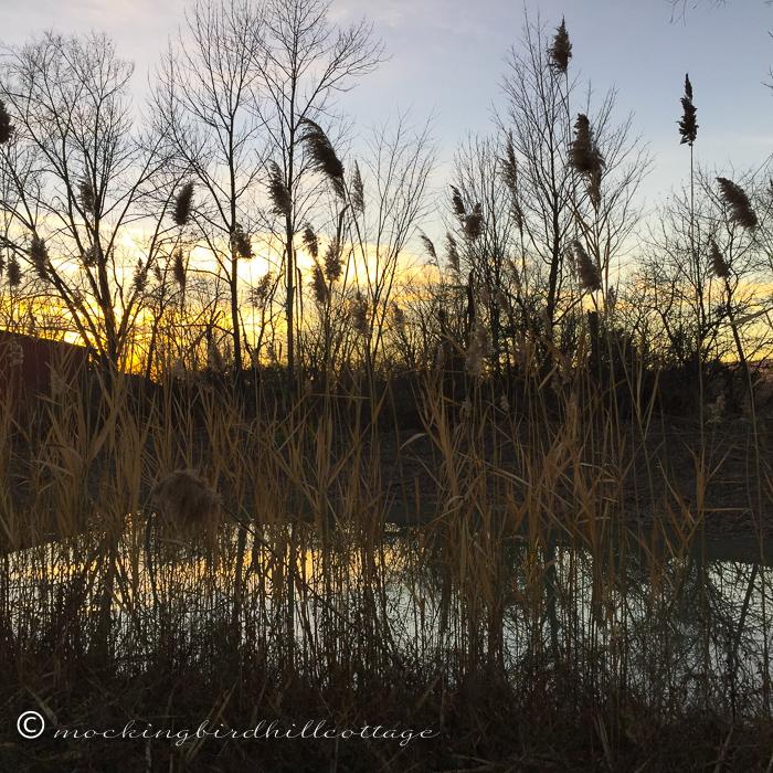 11-19-reedswatersunset