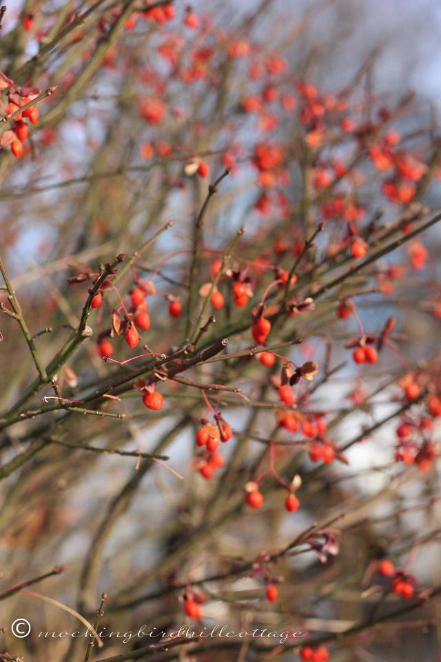 11-24-berries3