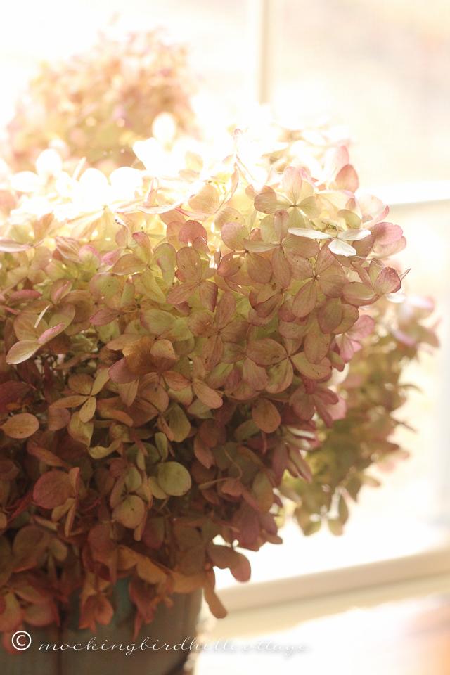 11-26-sunnyhydrangea