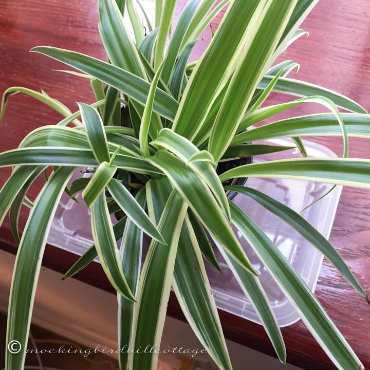 1-27-plant2