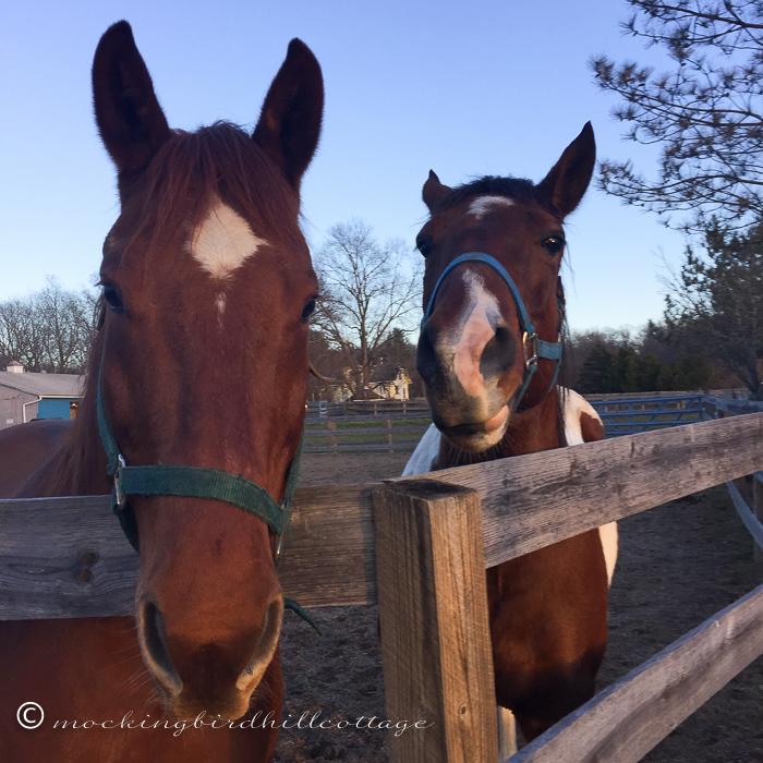12-5-horses